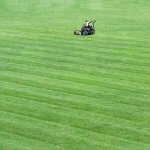 Lawn Mowing Services from More Time for You